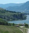 naramata bench 120x134 - British Columbia wines shine in All-Canadian Wine Championships
