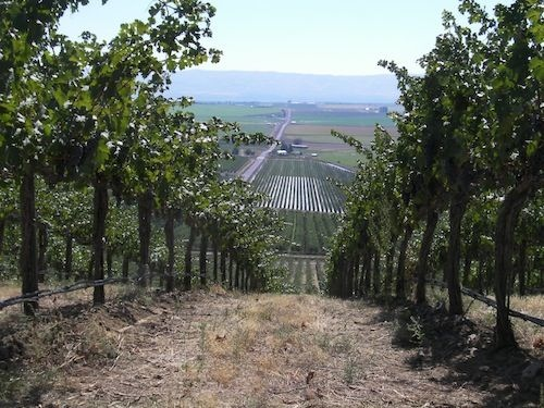 Stillwater Creek Vineyard is in the Frenchman Hills of Washington state.