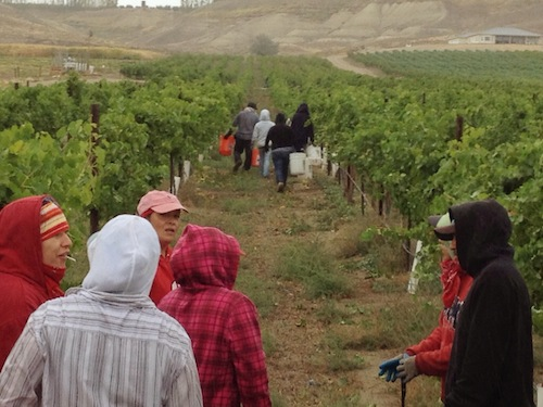 Workers try to stay warm during cold and rainy conditions Tuesday as picking for Viognier is postponed at Williamson Vineyards on the Sunnyslope region of Idaho's Snake River Valley.