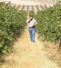 Bob Bertheau at Cold Creek Vineyard