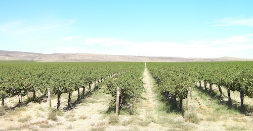 Cold Creek Vineyard is in Washington state.