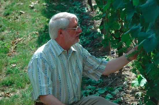 Founding winemaker David Adelsheim inspects the vines surrounding his eponymous winery in Newberg, Ore.