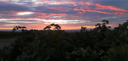 Cold Creek Vineyard is an estate vineyard for Chateau Ste. Michelle in Washington state.
