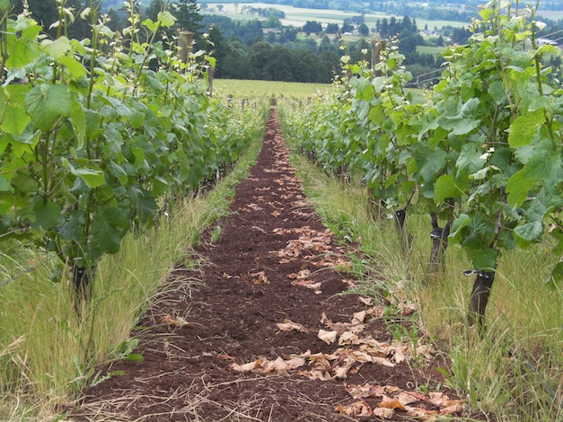 Domaine Drouhin Vineyard in the Dundee Hills ranks as one of the wine country destinations in Oregon.