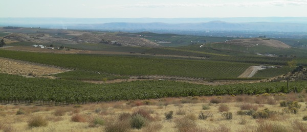 The forecast next week for Elephant Mountain Vineyard and other sites in the Yakima Valley is for highs in the mid 60s and lows in the 30s and 40s.