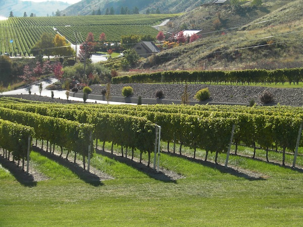 Gehringer Brothers Estate Winery in Oliver, British Columbia, shared the Golden Mile growing area with several wineries, including Hester Creek.