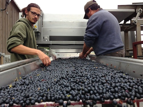 Reininger Winery is in the Walla Walla Valley of Washington state.