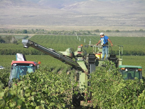 The Wahluke Slope in Washington state is one of the Columbia Valley's key grape-growing areas. Washington wine grapes are an important crop.