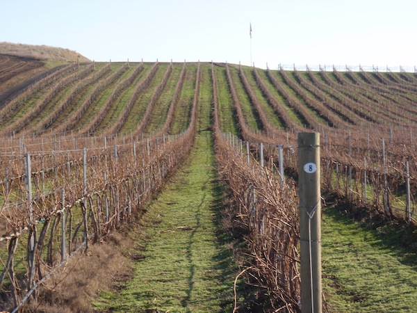 Mackey Vineyards in Walla Walla Valley
