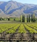 mendoza vineyard feature 120x134 - Argentina vs. Washington: a Malbec smackdown
