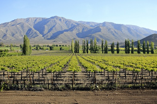 Mendoza vineyards in Argentina.