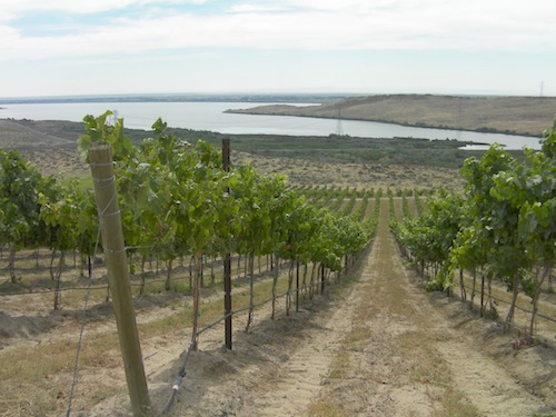 Spice Cabinet Vineyard is in the Horse Heaven Hills of Washington state. Top Washington Malbec is grown here.