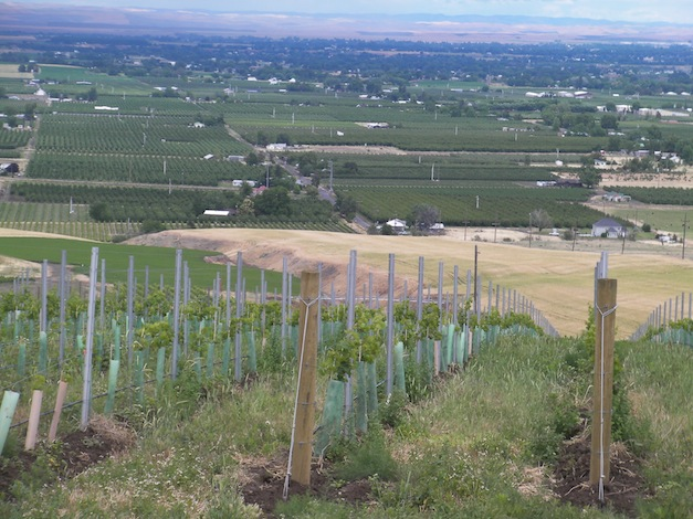 Seven Hills Vineyard, which is south of Milton-Freewater, Ore., is part of the Walla Walla Valley AVA, so wineries in Washington and Oregon are allowed to use it on their labels.