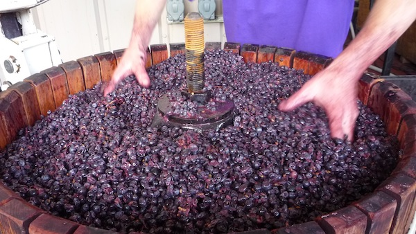 Pinot Noir is processed during 2013 crush for a Nouveau-style wine at Brandborg Winery & Vineyard in Elkton, Ore.