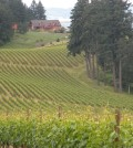 oregon vineyard feature 120x134 - Oregon wine industry enjoys record growth* in 2012