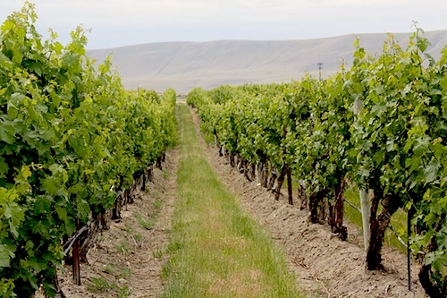 Duckhorn Vineyards is going to launch a brand on Red Mountain in Washington state.