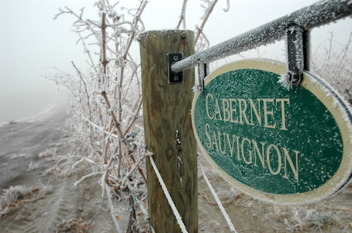 Frost clings to a sign in a Washington state cabernet sauvignon vineyard.