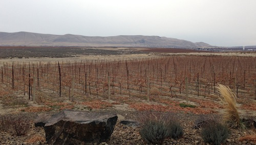 Washington wine country vineyards are cold.