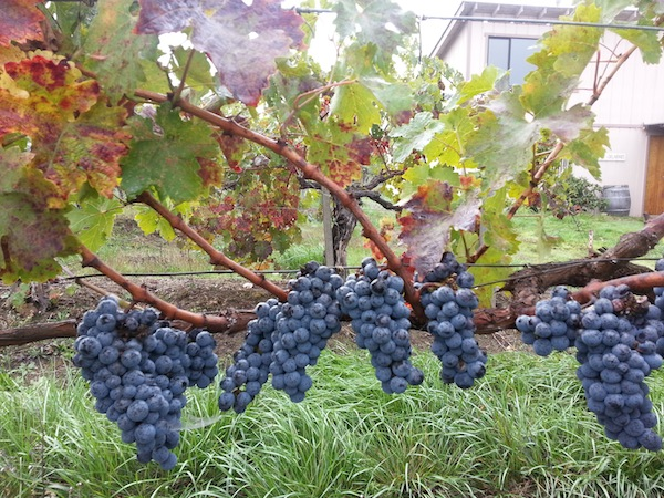The tasting room and winery at Spangler Vineyards in Roseburg, Ore., is surrounded by old vines of Cabernet Sauvignon.
