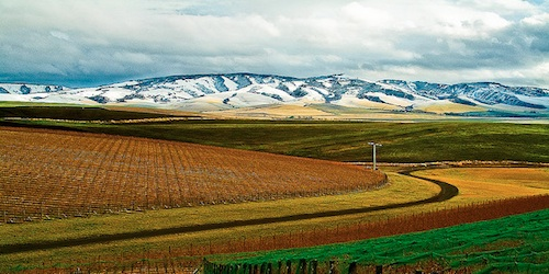 Walla Walla Valley wineries are open this weekend for Holiday Barrel Tasting events.
