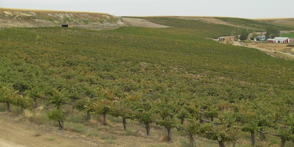 Arena Valley Vineyard in Parma, Idaho, provides Chardonnay to Melanie Krause at Cinder Wines.