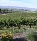 Bitner Vineyards feat 120x134 - Bitner Vineyards receives Idaho wine's first sustainable certification