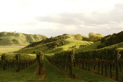 Gisborne Katoa Vineyard is on the North Island of New Zealand.