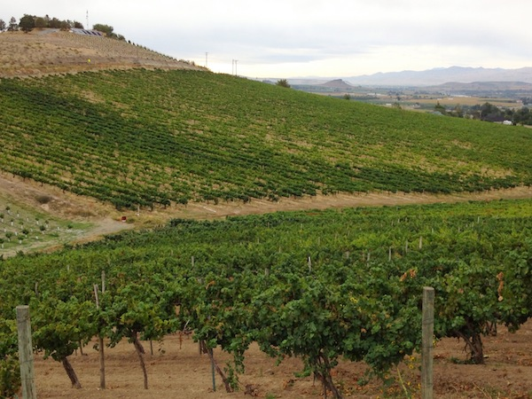 Bitner Vineyards on the Sunnyslope region of the Snake River Valley near Caldwell is the first vineyard in Idaho to receive the designation for certified sustainability under the Low Input Viticulture and Enology initiative in the Pacific Northwest.