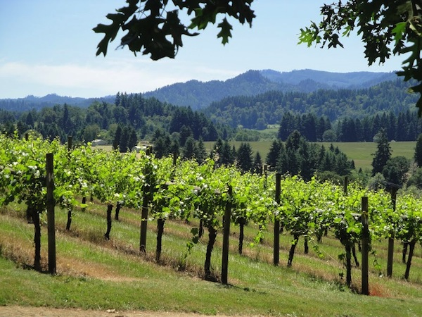 John Bradley established his vineyards in 1983 in Elkton, Ore., where he planted Baco Noir, Gewürztraminer, Pinot Noir and Riesling. He died unexpectedly on Jan. 22, 2014.