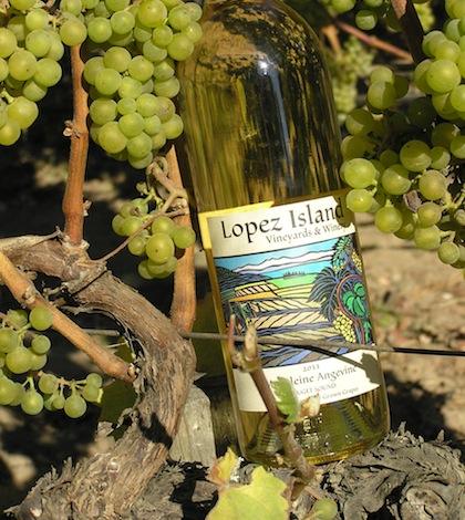 lopez-island-vineyards-madeleine-angevine-bottle-grapes-feature