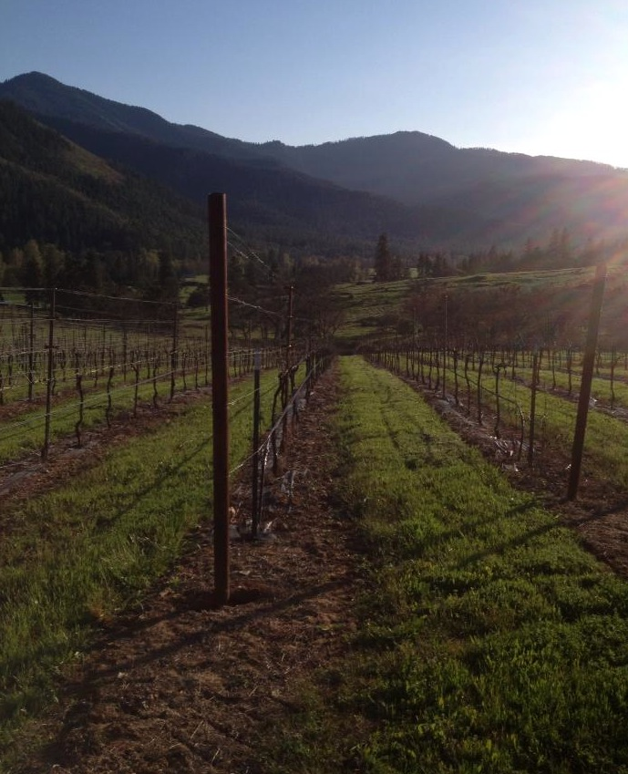 Mae's Vineyard in the Applegate Valley is the estate vineyard for Quady North. It is planted to Viognier, Syrah and Cabernet Franc.