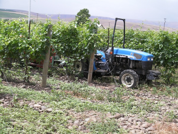 Stoney Vine Vineyard, an estate planting for Dusted Valley Vintners in Walla Walla, Wash., is within the pending The Rocks District of Milton-Freewater AVA.