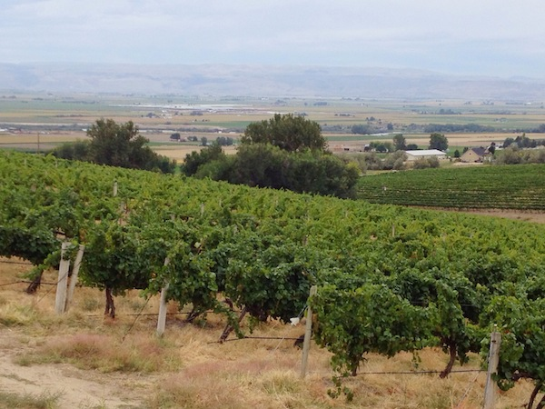 The Sunnyslope Wine Trail near Caldwell features some of the best wineries in the Snake River Valley.