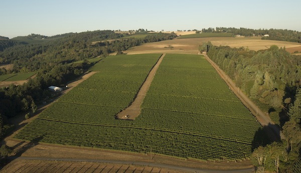 Elton Vineyard is an estate site in the Eola-Amity Hills for Willamette Valley Vineyards and founder Jim Bernau.