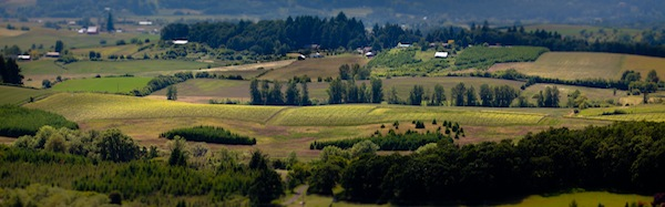 Elk Cove Vineyards in Gaston, Ore., has purchased Goodrich Road Vineyard in the Yamhill-Carlton AVA.