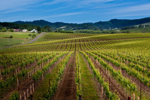 Goodrich Road Vineyard, less than 3 miles north of Yamhill, Ore., was planted in 2007 to Pinot Noir and Chardonnay.