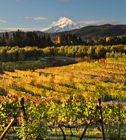 mount-hood-with-vineyards-cgwa-featured