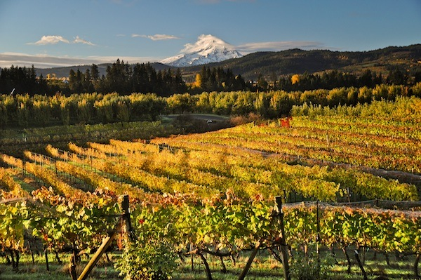 Mount Hood looms in the distance as wine lovers in both Oregon and Washington tour the Columbia Gorge.