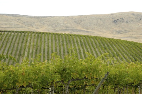 Red Willow Vineyard is in Washington's Yakima Valley.