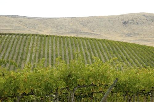 Red Willow Vineyard is in Washington's Yakima Valley.