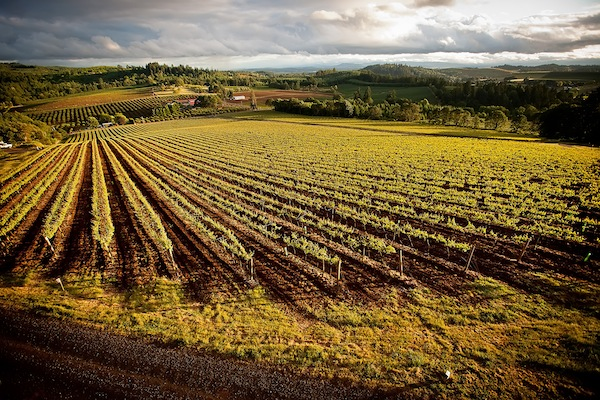 Willamette Valley Vineyards will soon unveil its Bernau Block Chardonnay, one of three new vineyard-designate Chardonnays by the Turner, Ore., producer.