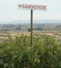 sangiovese red willow featured 120x134 - Sangiovese a taste of Italy in Pacific Northwest