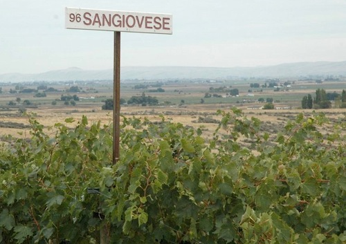 Sangiovese is a minor wine grape variety in Washington state.