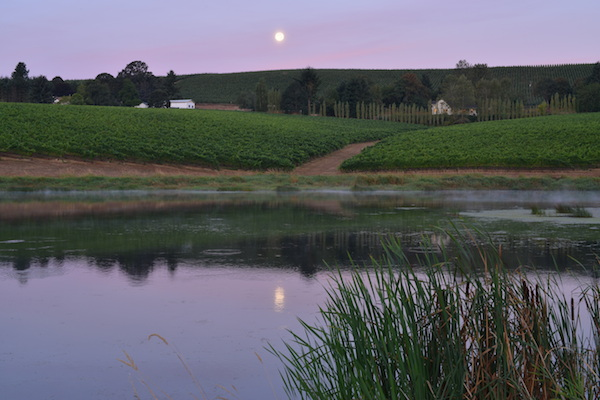 St. Jory Vineyard in Salem, Ore., an estate site for Duck Pond Cellars, features a restored wetland that provides habitat for rainbow trout and migratory birds.