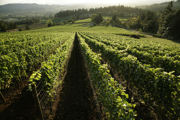 Bryan Creek Vineyard, a site first planted in 1989, has been sold to Adelsheim Vineyard.