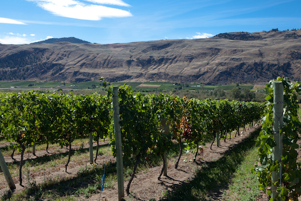 Desert Hills Estate Winery in the Okanagan Valley near Oilver, British Columbia, produced the top white at the 2014 All Canadian Wine Championships earlier this month.