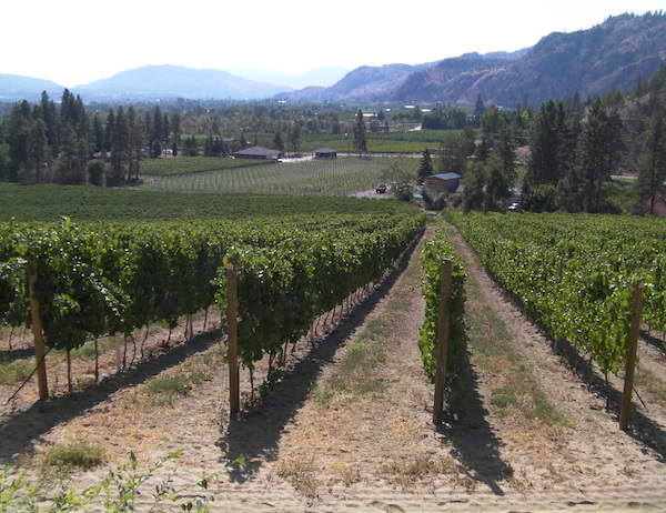 Secrest Vineyard, an estate site for Wild Goose Vineyards, looks south toward Oliver, the most prolific growing area in British Columbia.