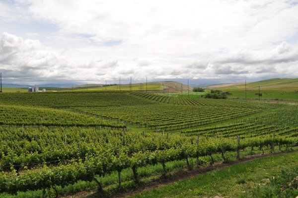 Windrow Vineyard in the Walla Walla Valley near Milton-Freewater, Ore., was planted in 1981.