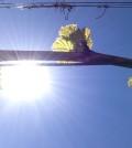 vines sunshine featured 120x134 - Oregon vineyards trending warmer than near-record 2013 vintage