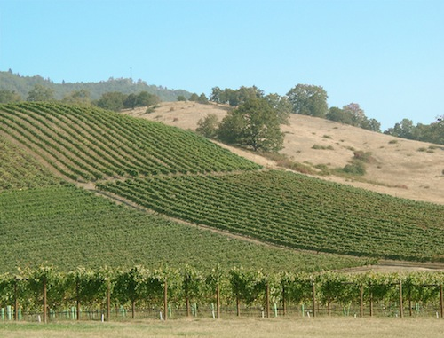Cobblestone Vineyard is one of the estate vineyards at Abacela near Roseburg, Ore.
